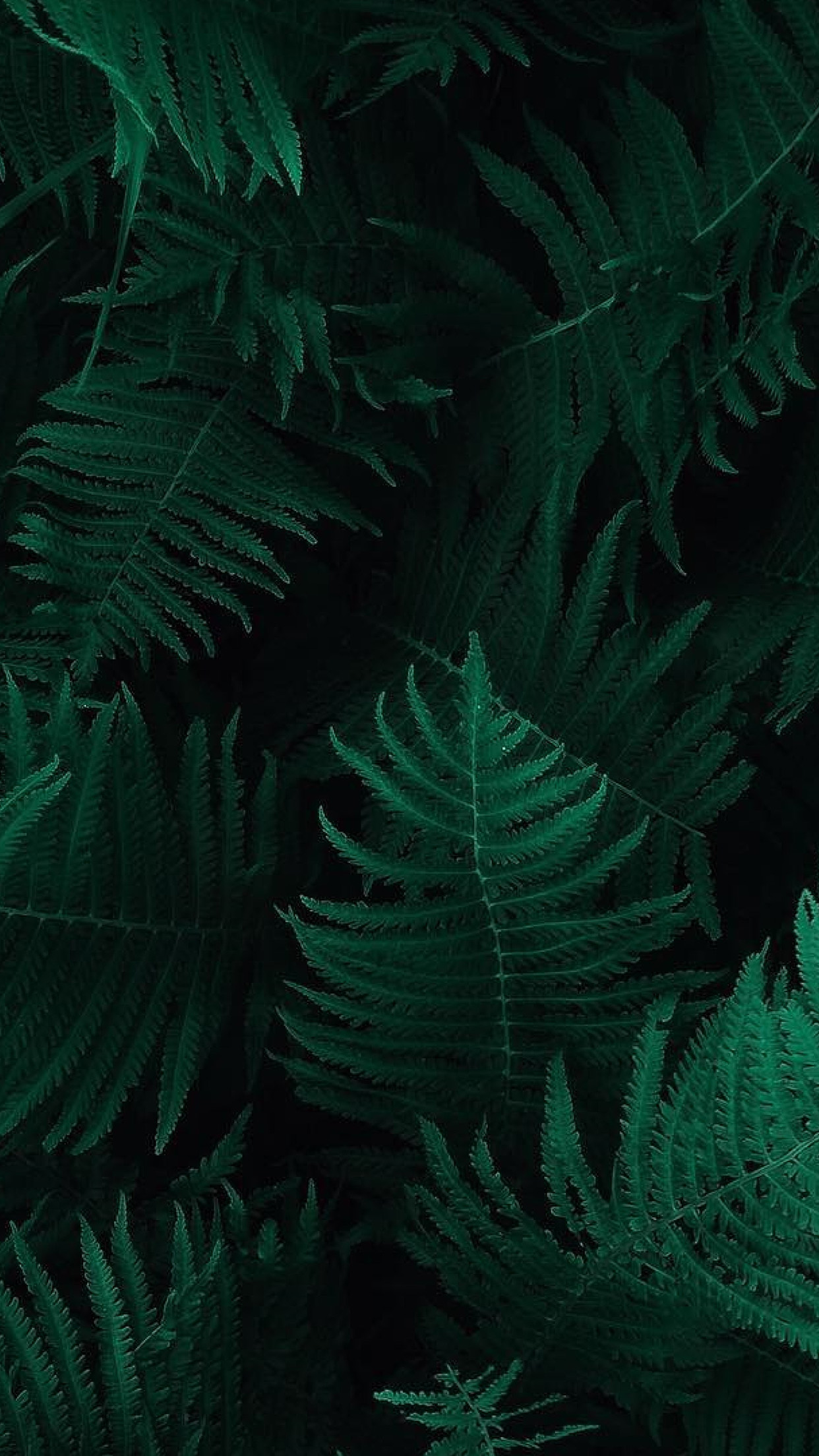 Iphone6papers Com Iphone 6 Wallpaper Ob55 Green Leaf