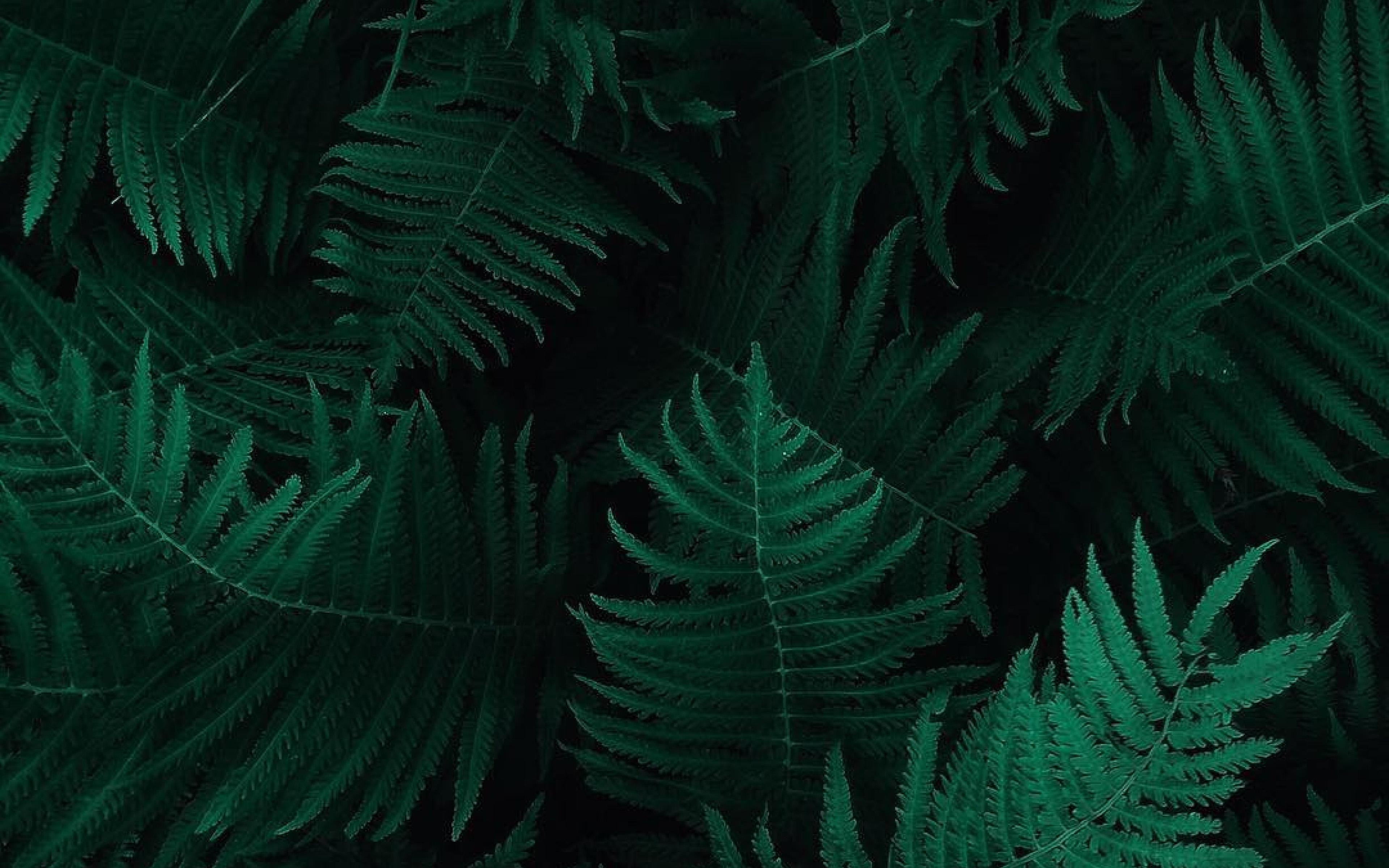Ob55 Green Leaf Dark Nature Wallpaper