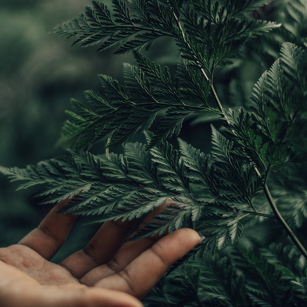 android-wallpaper-ob57-leaf-forest-tree-hand-green-nature-wallpaper
