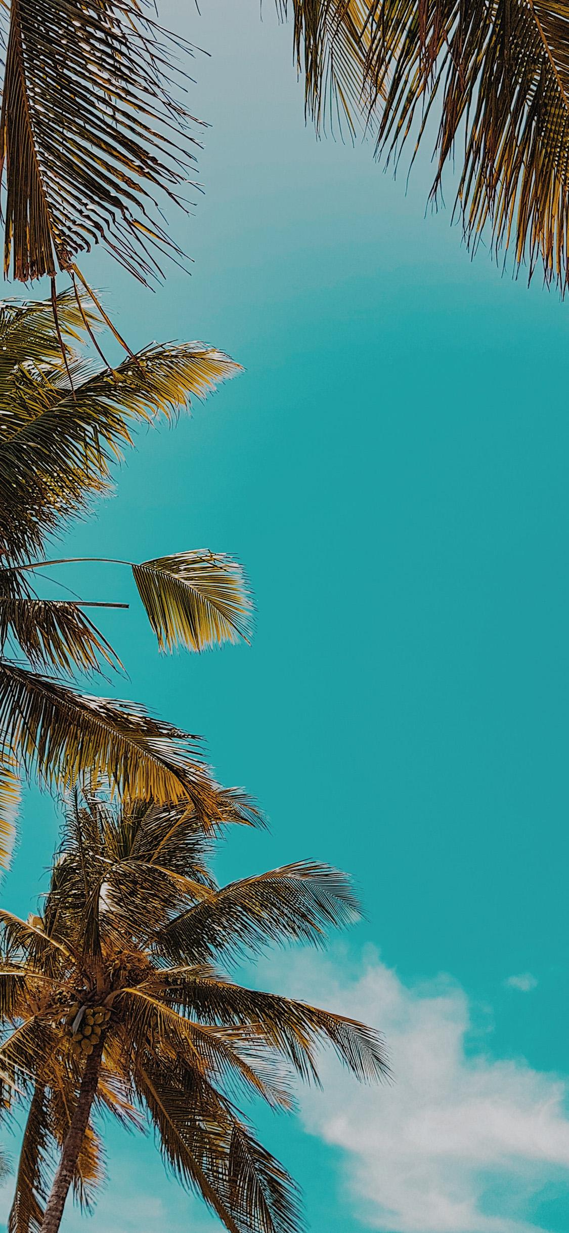 Iphonexpapers Com Iphone X Wallpaper Ob59 Summer Tree