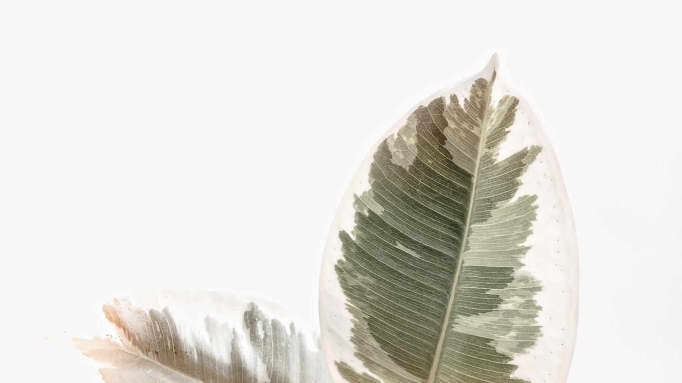 desktop-wallpaper-laptop-mac-macbook-air-ob73-white-minimal-simple-leaf-nature-wallpaper