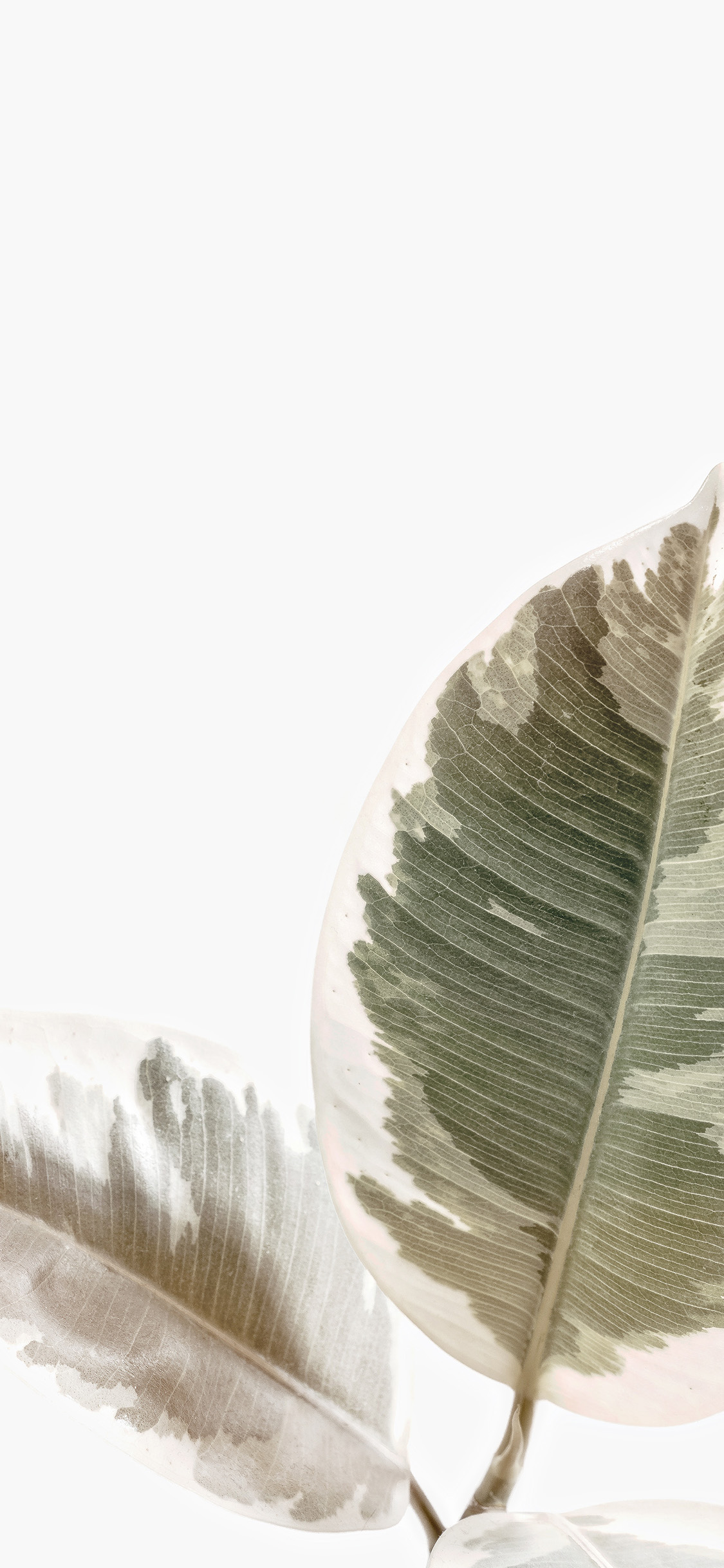 iPhonexpapers.com-Apple-iPhone-wallpaper-ob73-white-minimal-simple-leaf-nature