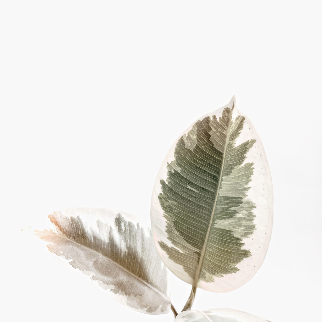 android-wallpaper-ob73-white-minimal-simple-leaf-nature-wallpaper