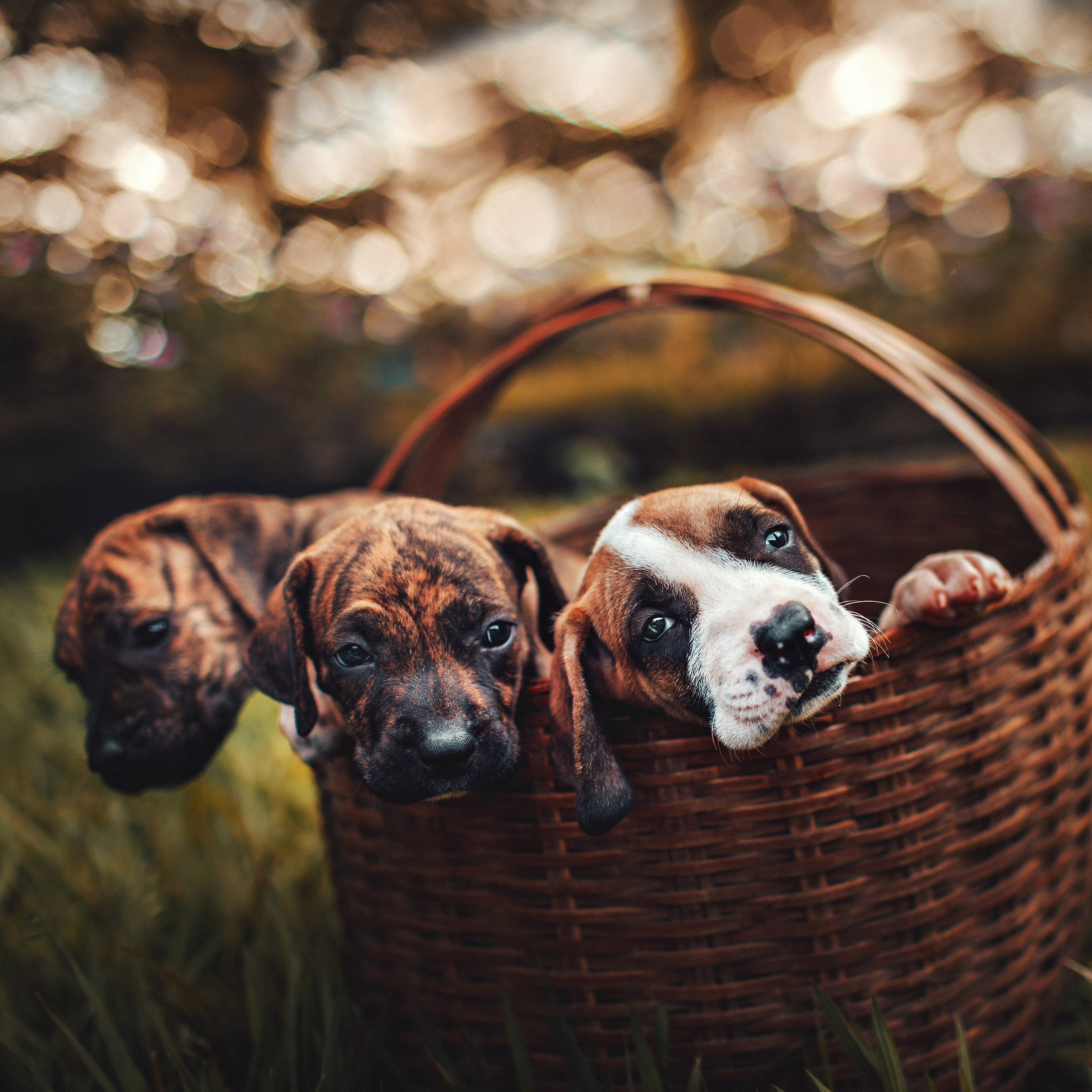 Papers Co Android Wallpaper Oc00 Dog Animal Cute Nature