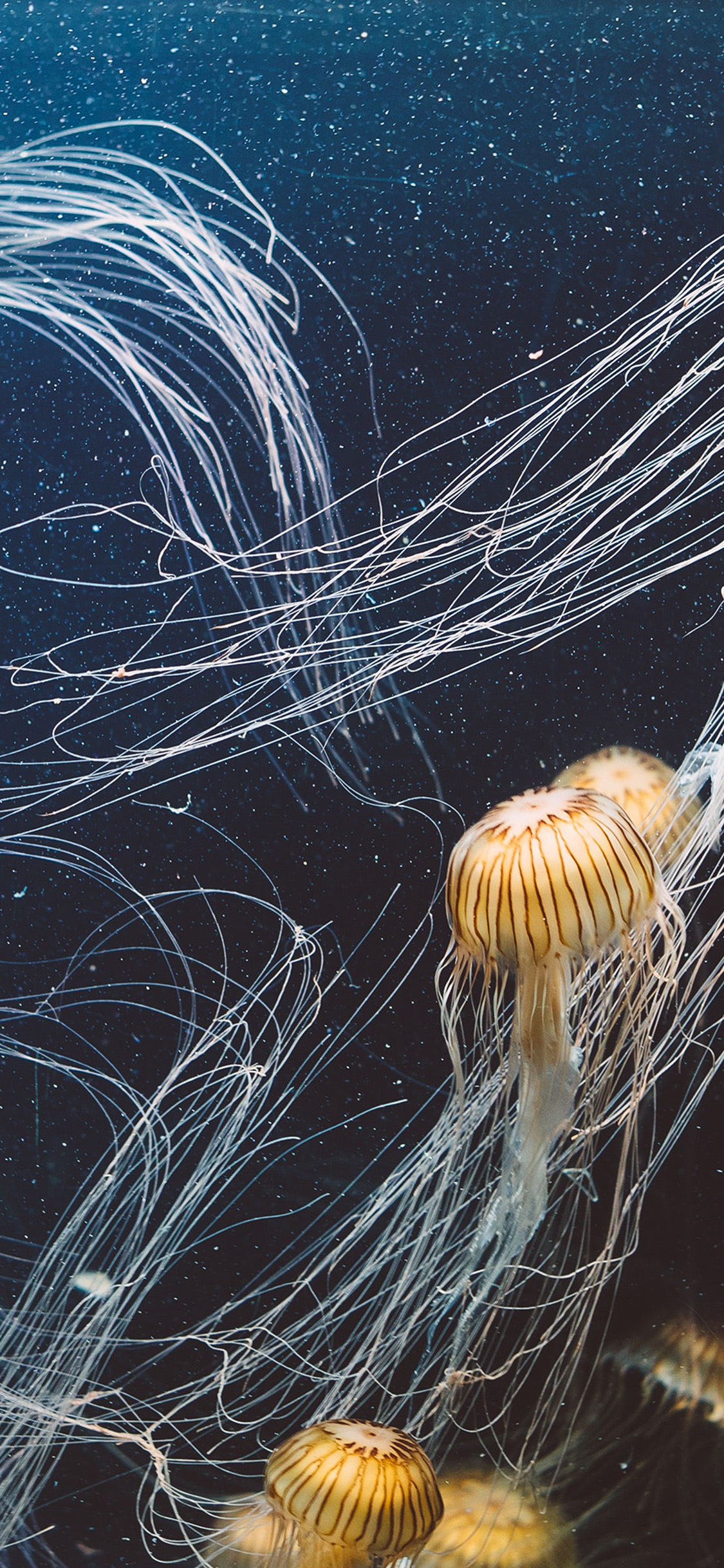 iPhonexpapers.com-Apple-iPhone-wallpaper-oc01-animal-water-sea-ghost-jellyfish-ocean-nature