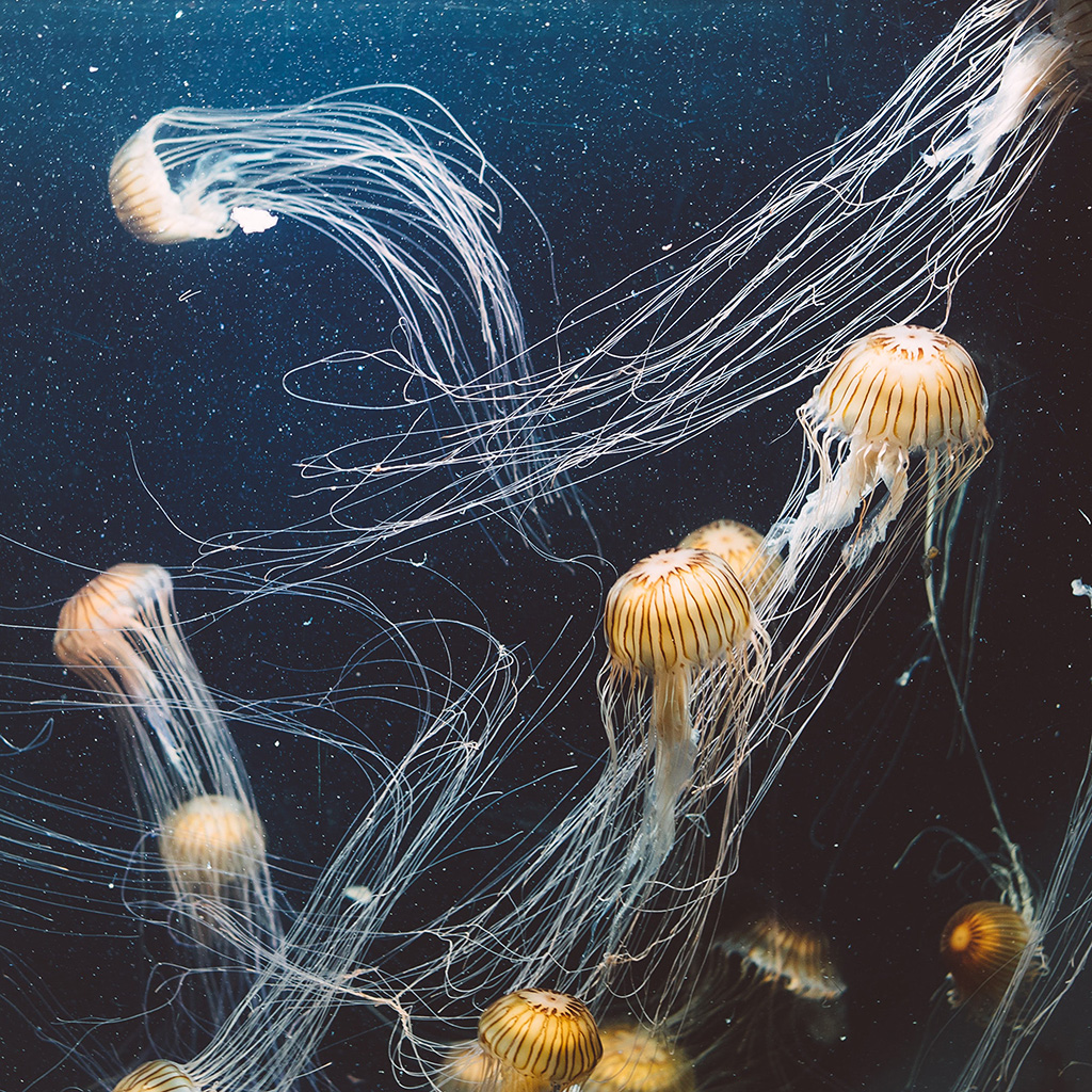 android-wallpaper-oc01-animal-water-sea-ghost-jellyfish-ocean-nature-wallpaper