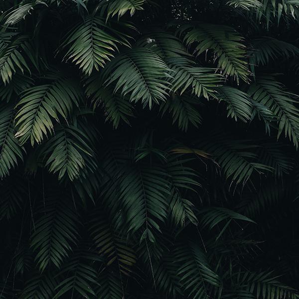 iPapers.co-Apple-iPhone-iPad-Macbook-iMac-wallpaper-oc25-summer-tree-leaf-vacation-green-nature-wallpaper