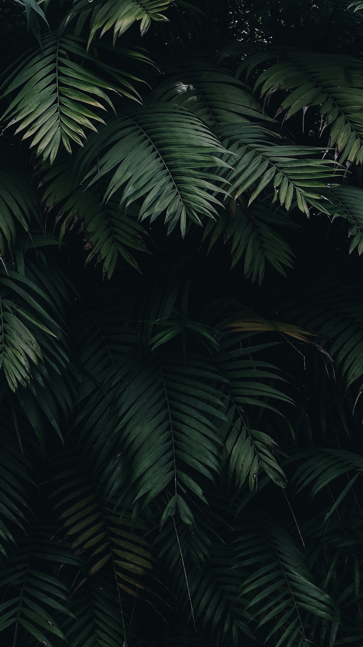 iPhone21papers.com   iPhone 21 wallpaper   oc21 summer tree leaf ...