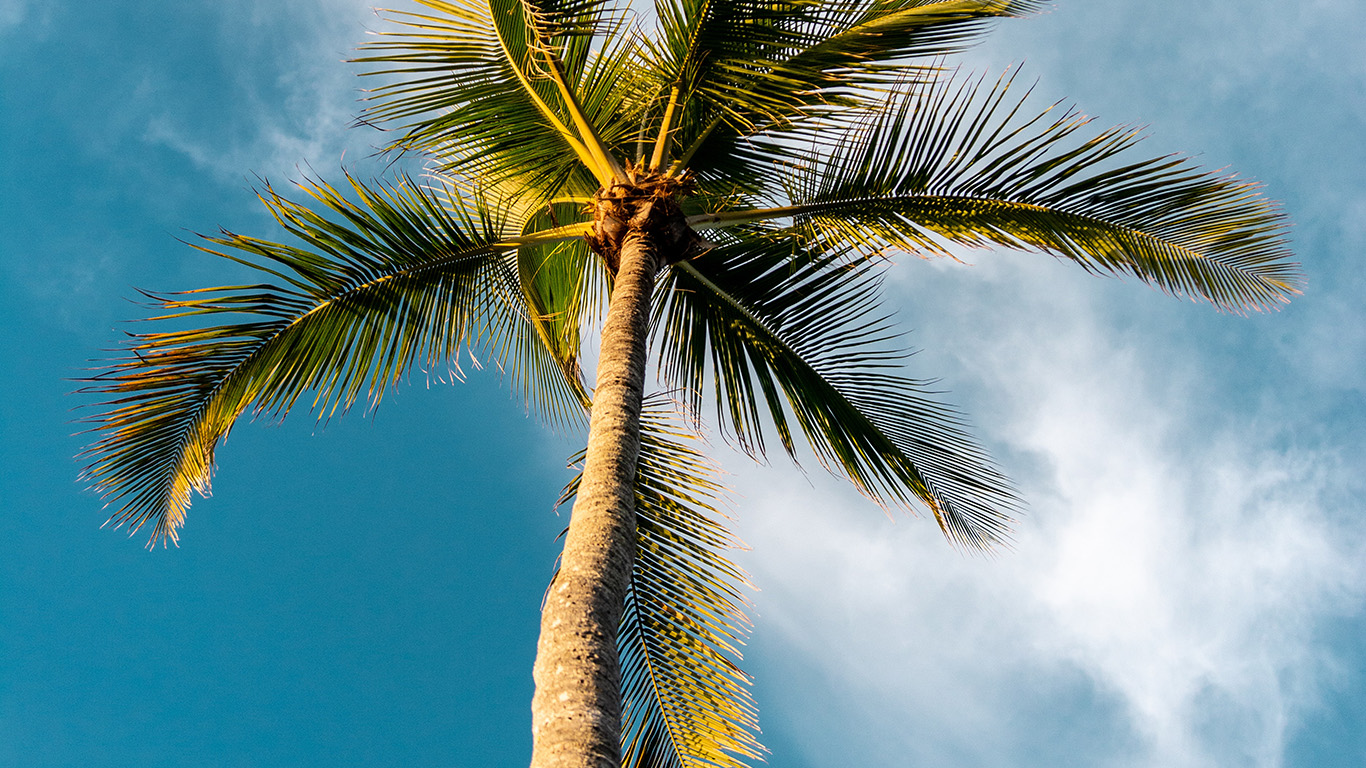 desktop-wallpaper-laptop-mac-macbook-air-oc46-tree-summer-palm-sky-sunny-nature-wallpaper