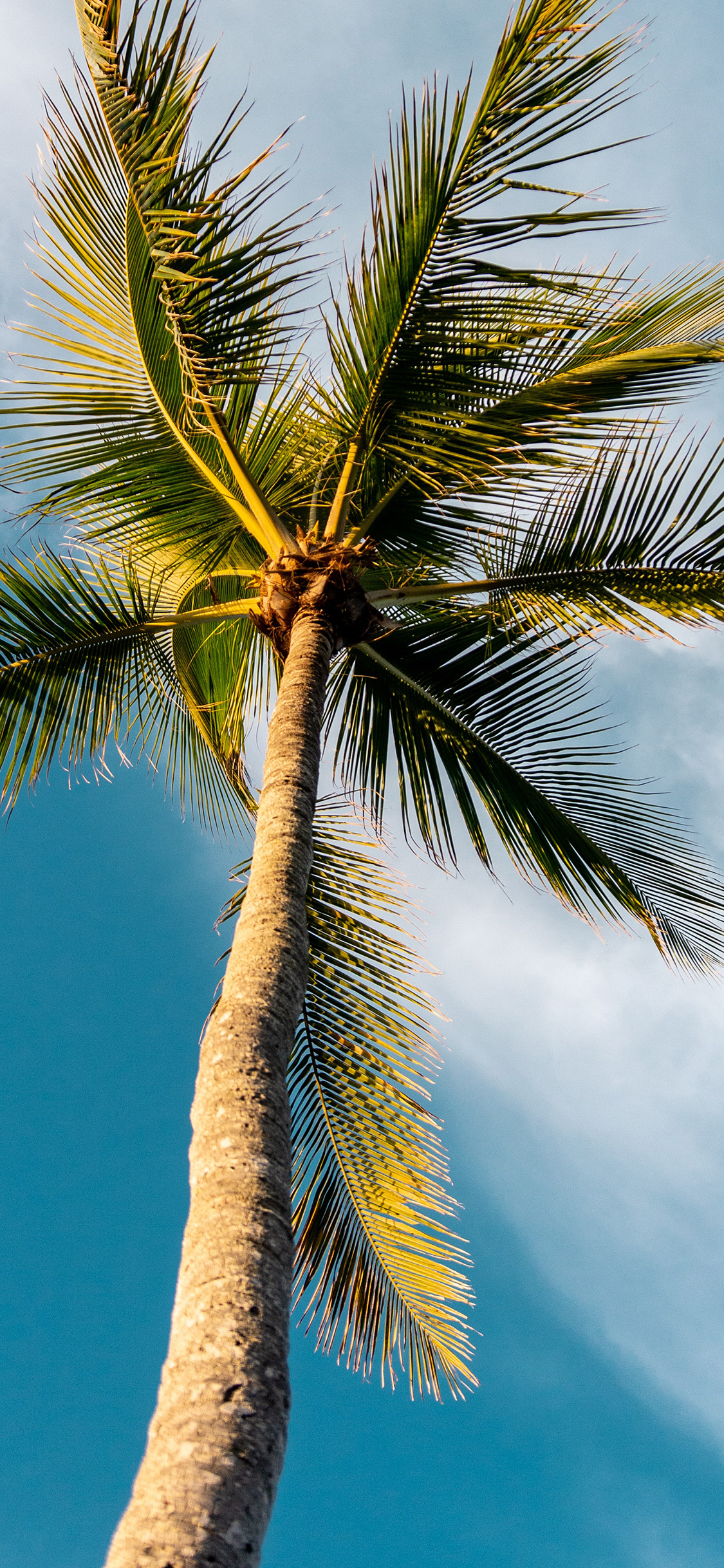 Iphonexpapers Com Iphone X Wallpaper Oc46 Tree Summer Palm Sky Sunny Nature