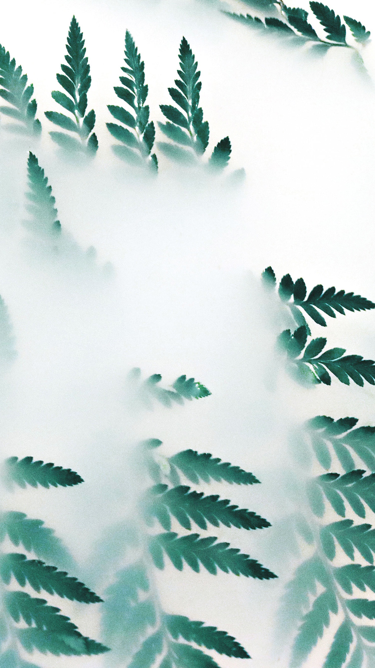 Iphone6papers Com Iphone 6 Wallpaper Oc53 Leaf Hip