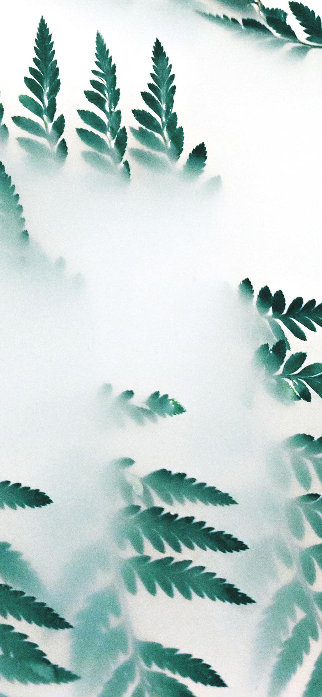 iPhonexpapers.com-Apple-iPhone-wallpaper-oc53-leaf-hip-minimal-tree-flower-simple-nature