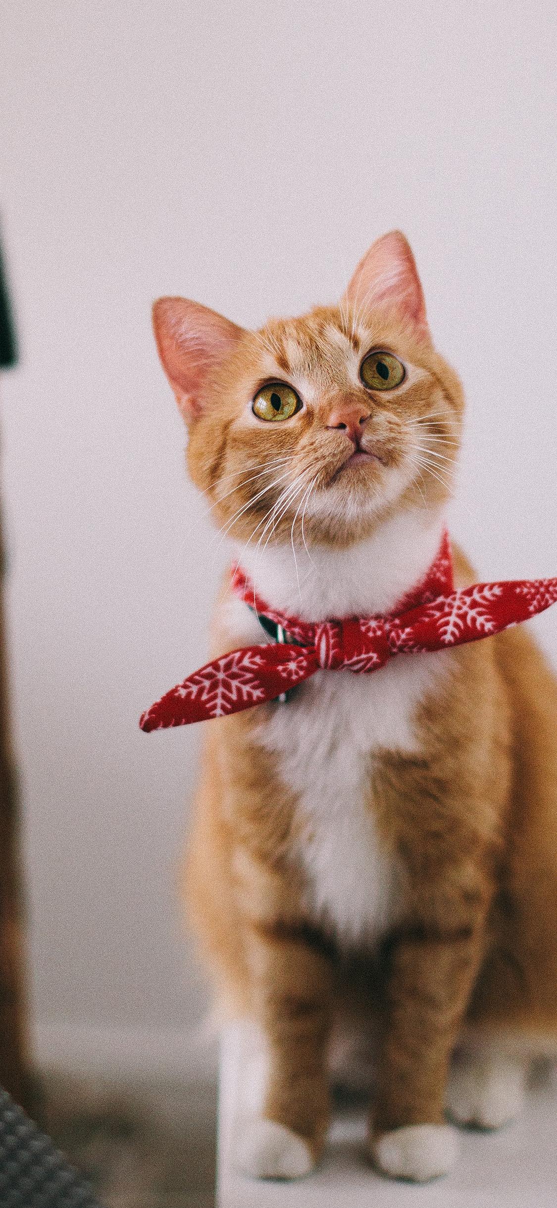 iPhonexpapers.com-Apple-iPhone-wallpaper-oc69-cat-cute-animal-nature