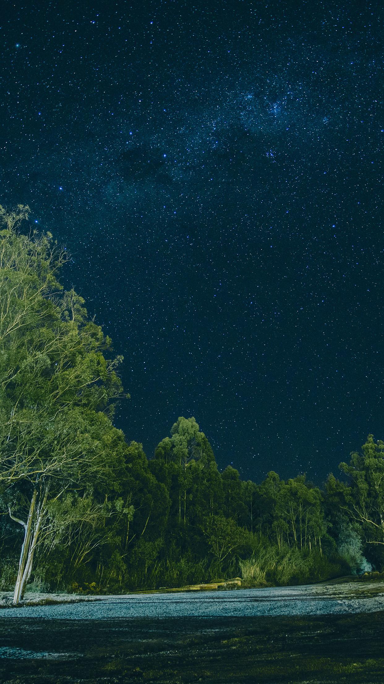Oc85 Night Galaxy Sky Star Nature Wood Forest Wallpaper