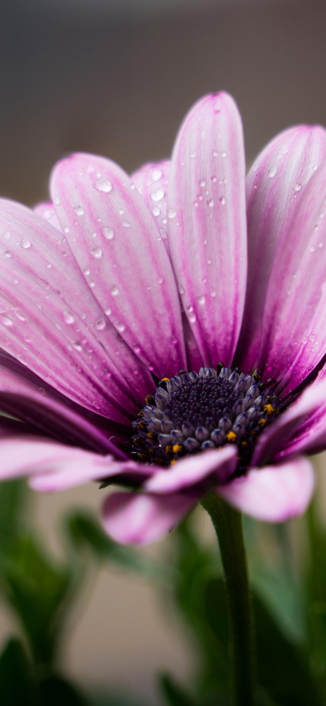 iPhonexpapers.com-Apple-iPhone-wallpaper-oc99-flower-purple-spring-nature