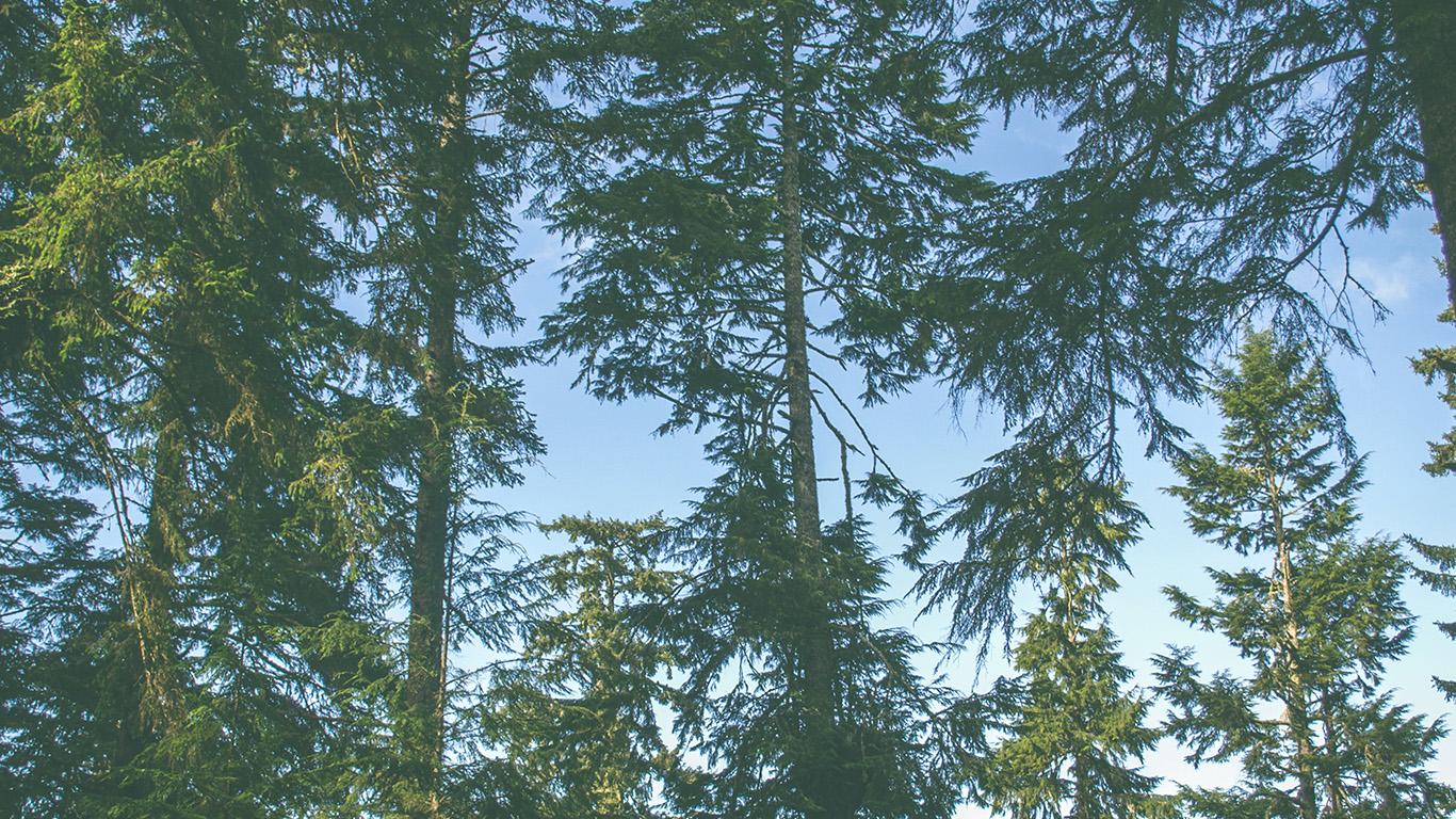 desktop-wallpaper-laptop-mac-macbook-air-od05-nature-wood-forest-tree-wallpaper