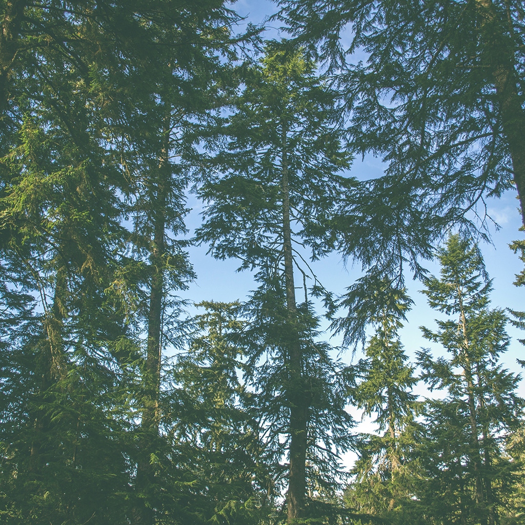 wallpaper-od05-nature-wood-forest-tree-wallpaper