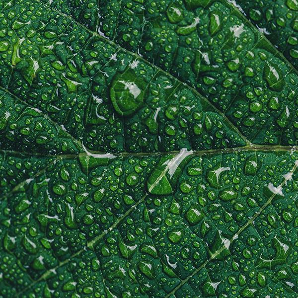 iPapers.co-Apple-iPhone-iPad-Macbook-iMac-wallpaper-od15-nature-leaf-rain-green-wallpaper