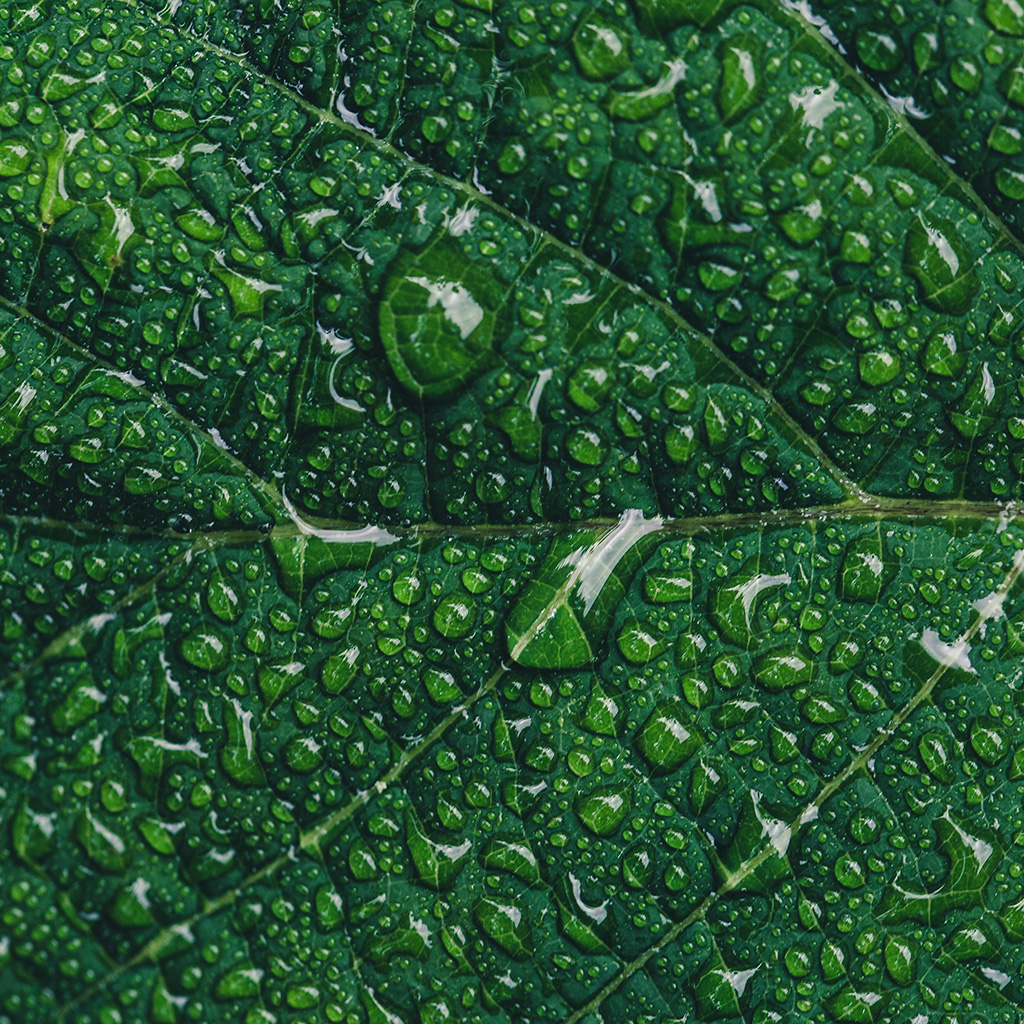android-wallpaper-od15-nature-leaf-rain-green-wallpaper