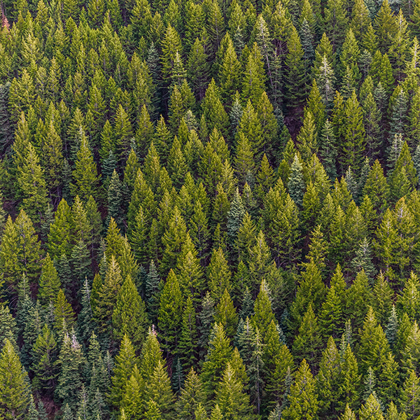 iPapers.co-Apple-iPhone-iPad-Macbook-iMac-wallpaper-od17-nature-wood-forest-wallpaper