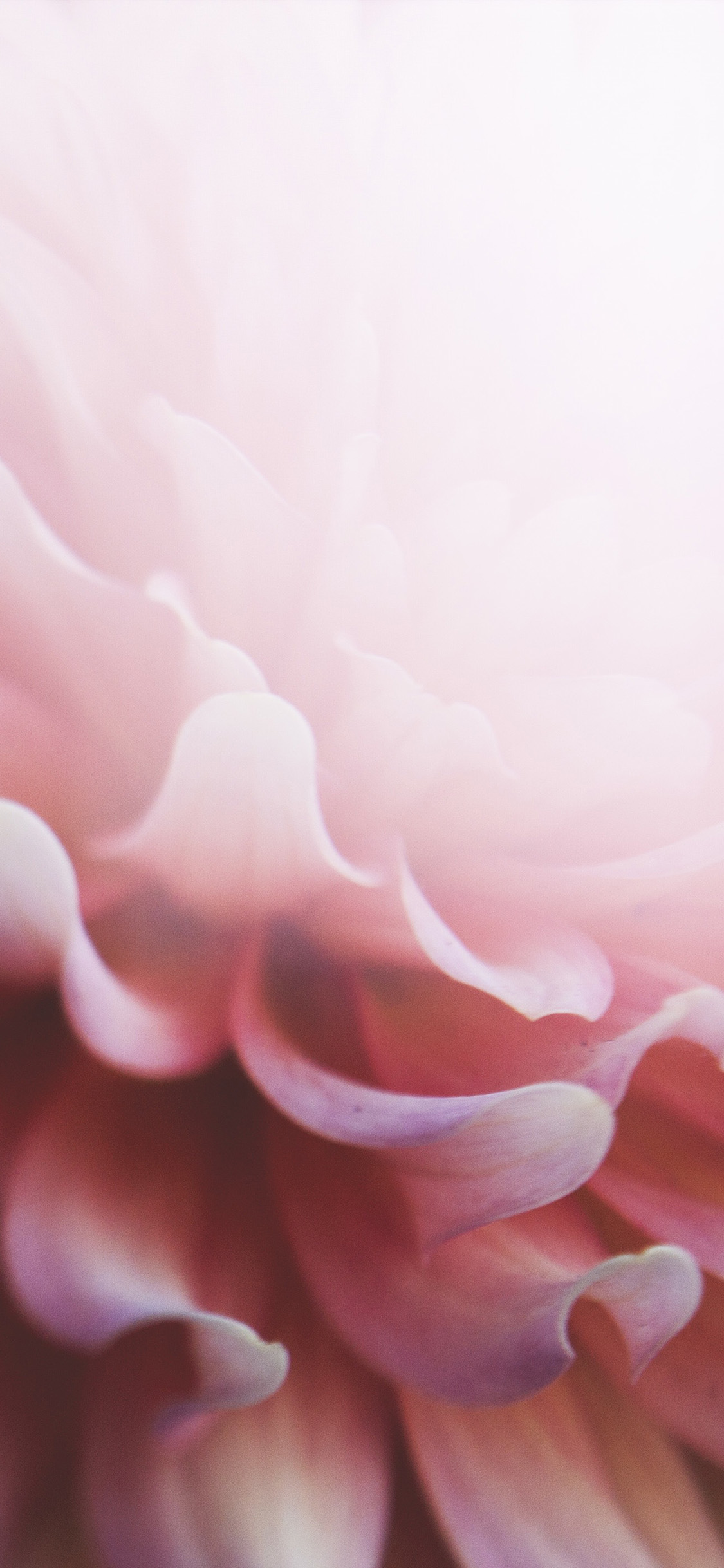 iPhonexpapers.com-Apple-iPhone-wallpaper-od98-nature-flower-pink-leaf-bokeh-lovely