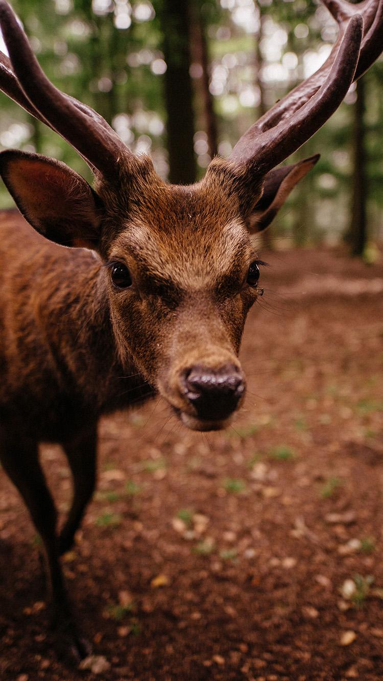 iPhone7papers.com-Apple-iPhone7-iphone7plus-wallpaper-oe31-nature-deer-animal-cute