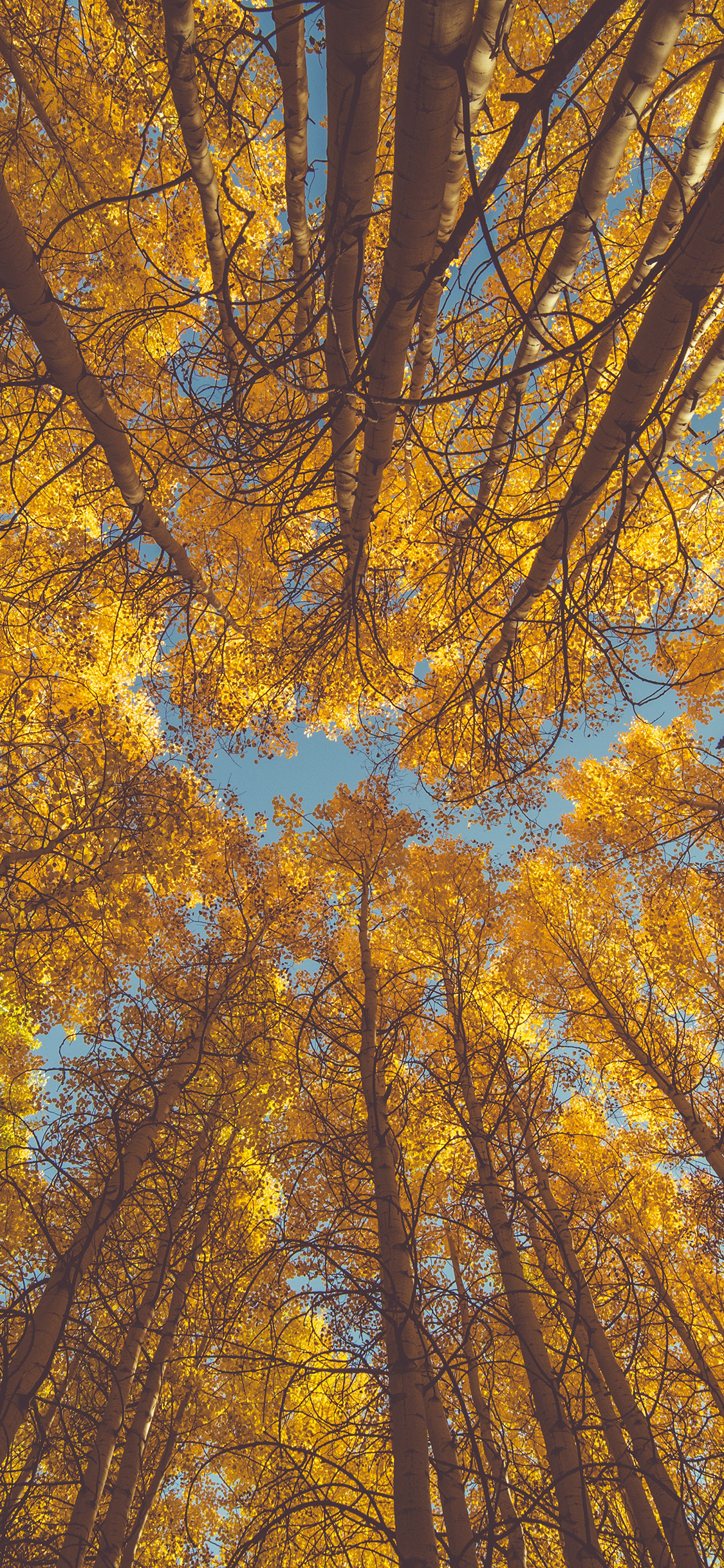 Iphone11papers Com Iphone11 Wallpaper Oe84 Nature Fall Tree Autumn