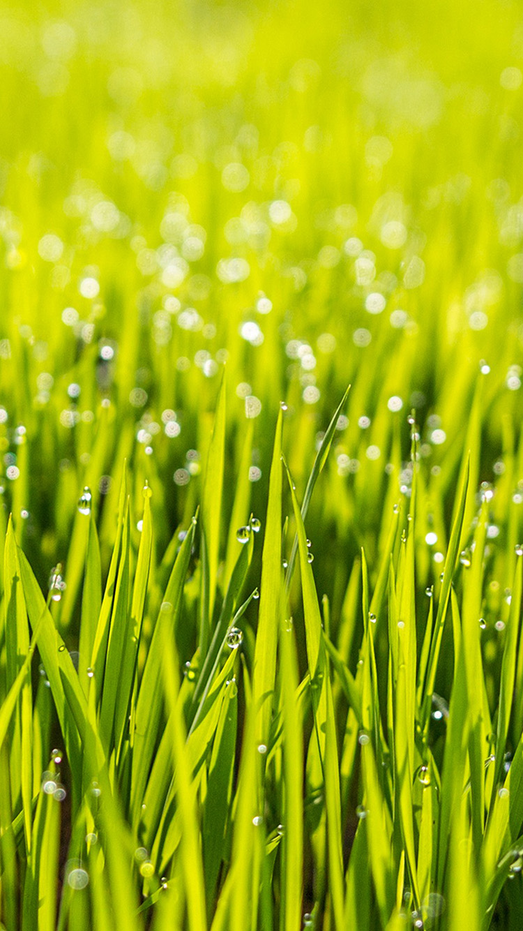 iPhone7papers.com-Apple-iPhone7-iphone7plus-wallpaper-of34-nature-lawn-green-raindrop