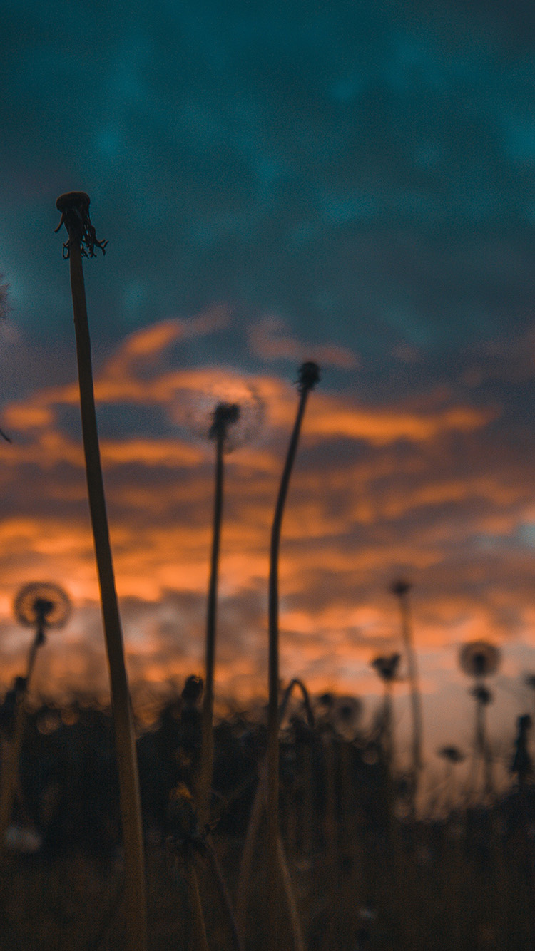 iPhone7papers.com-Apple-iPhone7-iphone7plus-wallpaper-of46-nature-sunset-flower