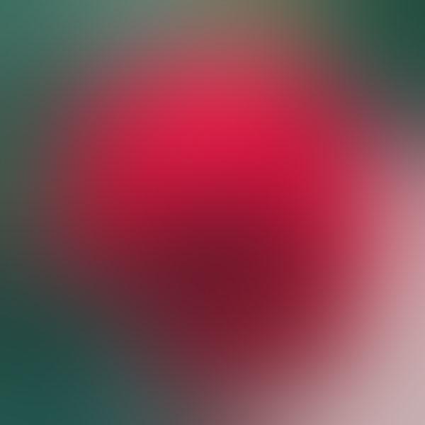 iPapers.co-Apple-iPhone-iPad-Macbook-iMac-wallpaper-sh57-red-rose-drop-gradation-blur-wallpaper