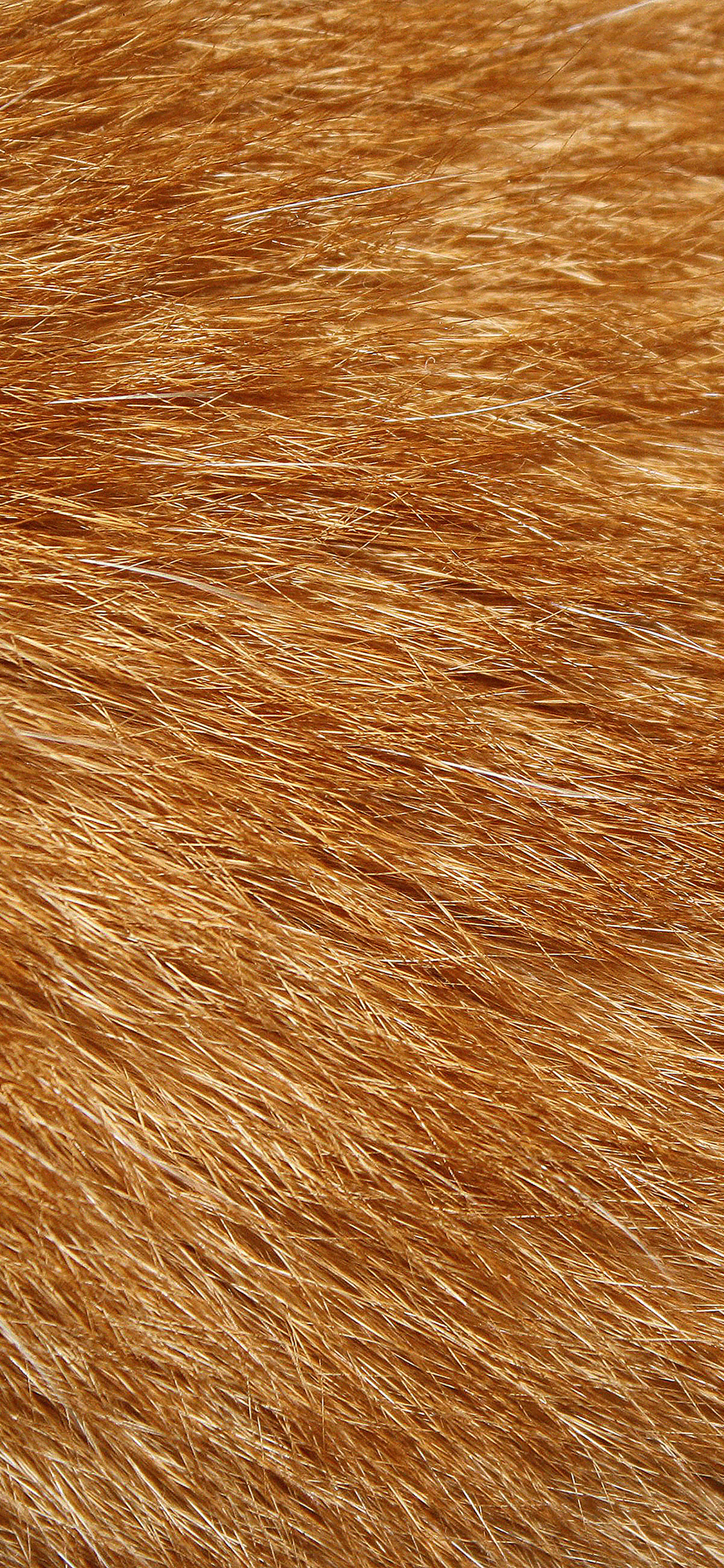 iPhoneXpapers.com-Apple-iPhone-wallpaper-vd14-golden-dog-fur-pattern