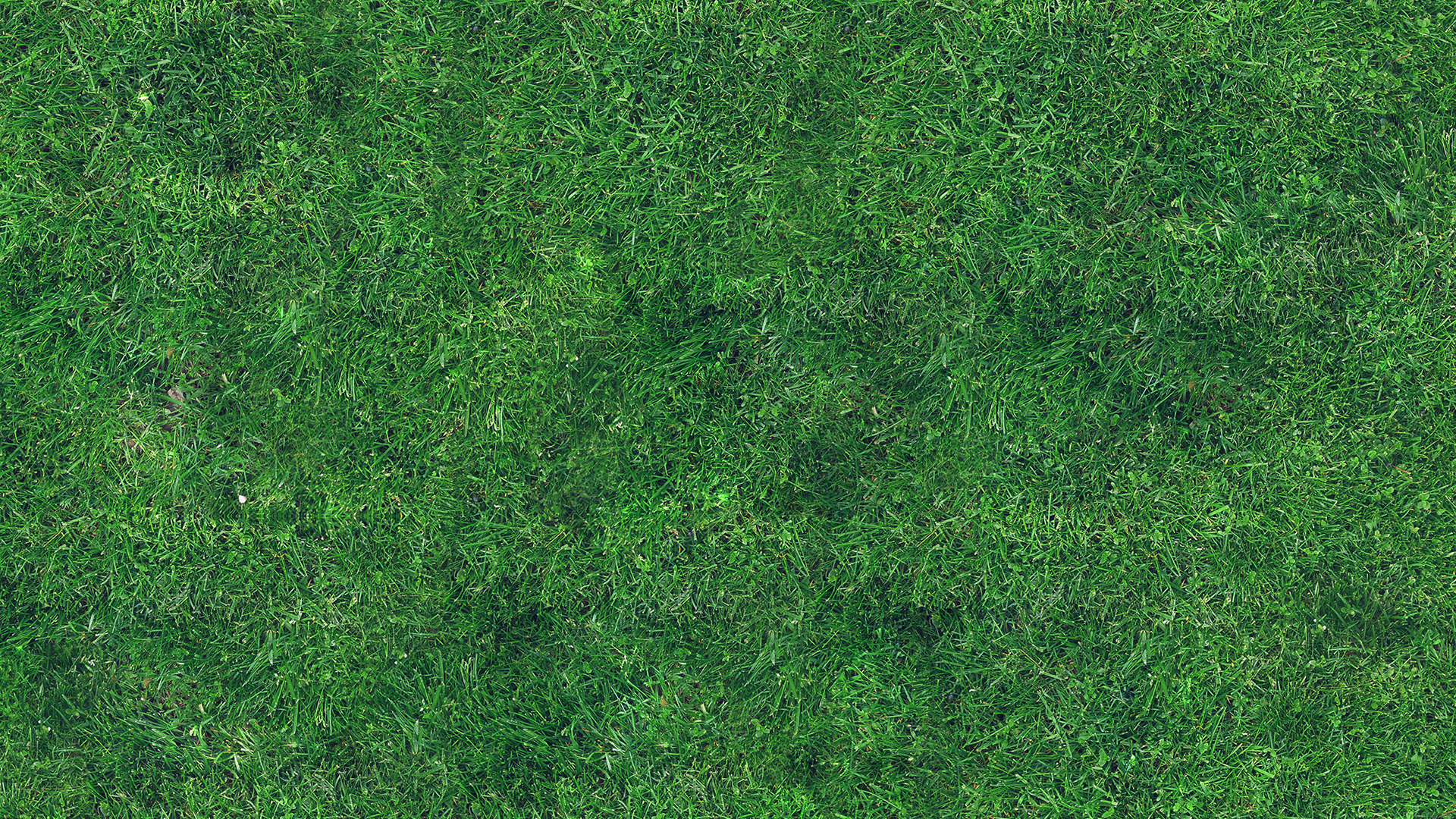 Vg56 Grass Texture Nature Pattern Papers Co