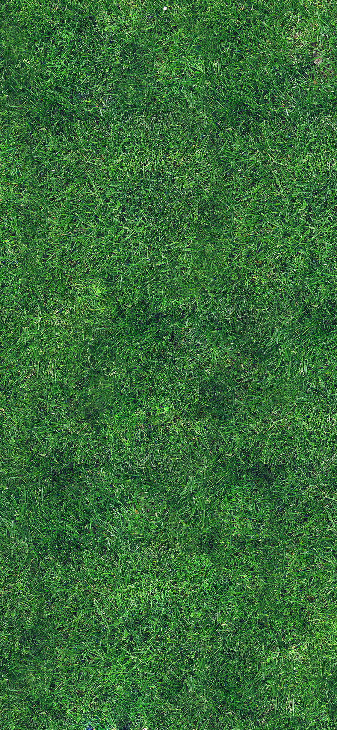 Iphonexpapers Vg56 Grass Texture Nature Pattern