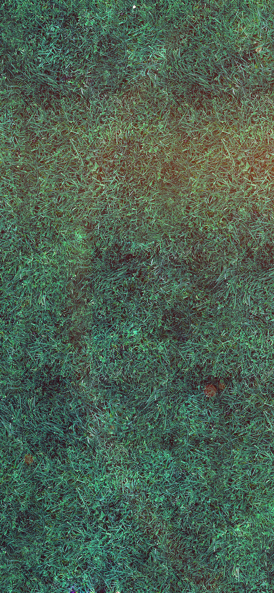 iPhonexpapers.com-Apple-iPhone-wallpaper-vg57-grass-blue-flare-texture-nature-pattern