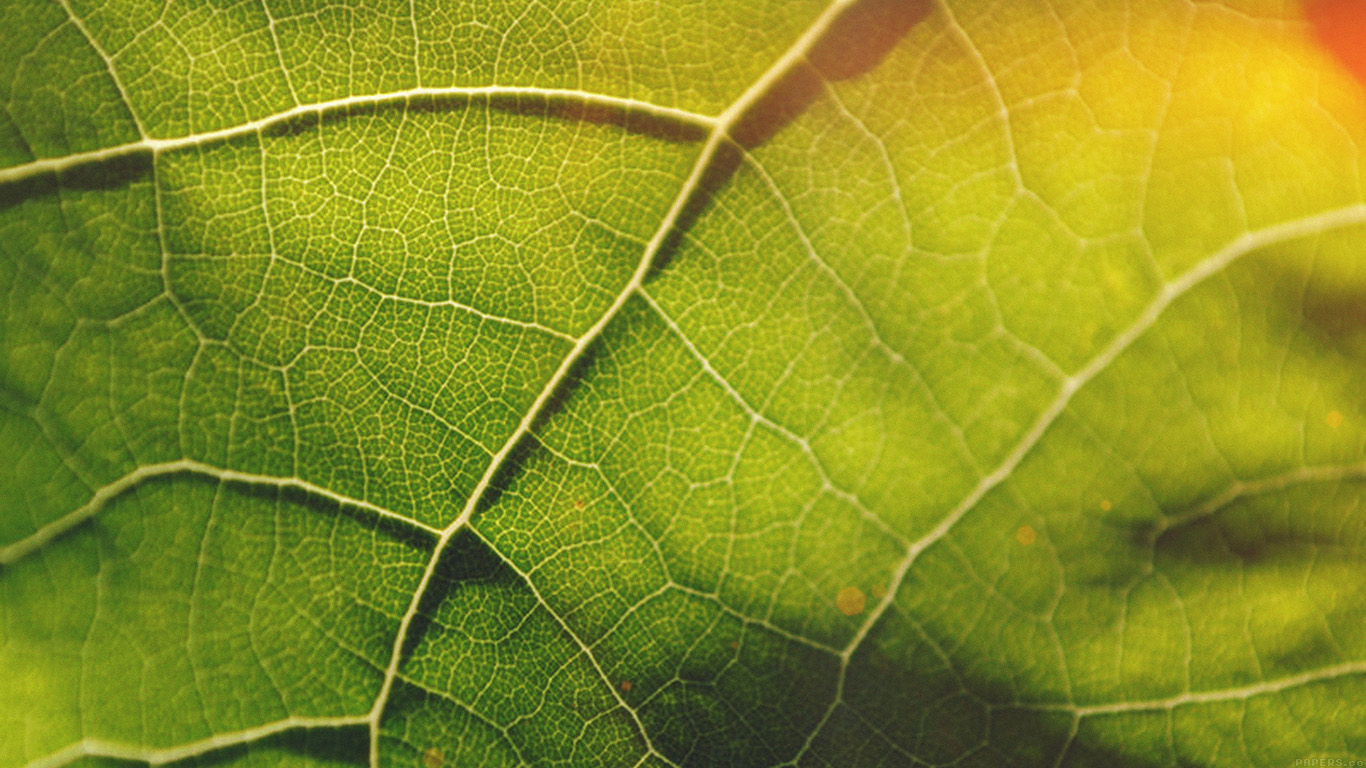 desktop-wallpaper-laptop-mac-macbook-airvg58-leaf-flare-nature-wood-love-pattern-wallpaper