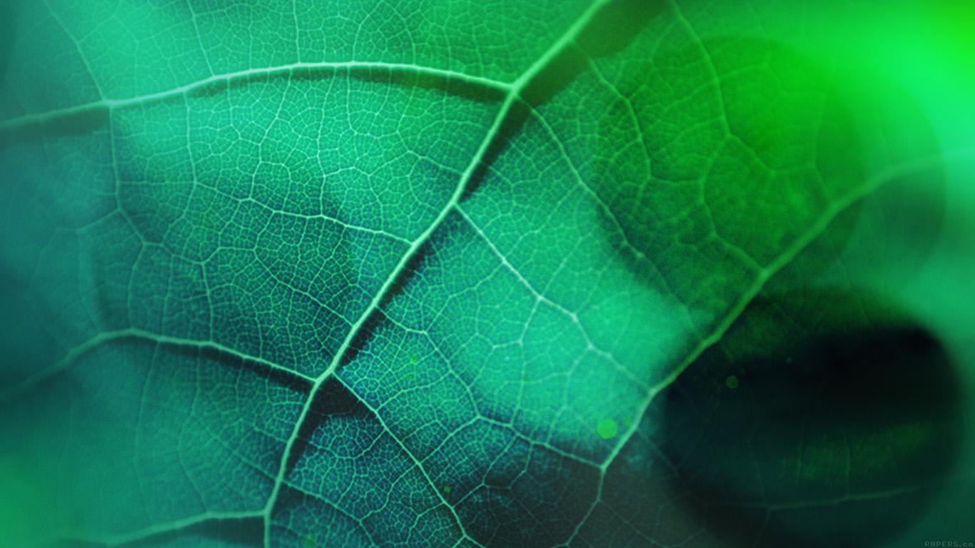 desktop-wallpaper-laptop-mac-macbook-airvg59-leaf-flare-nature-green-wood-love-pattern-wallpaper
