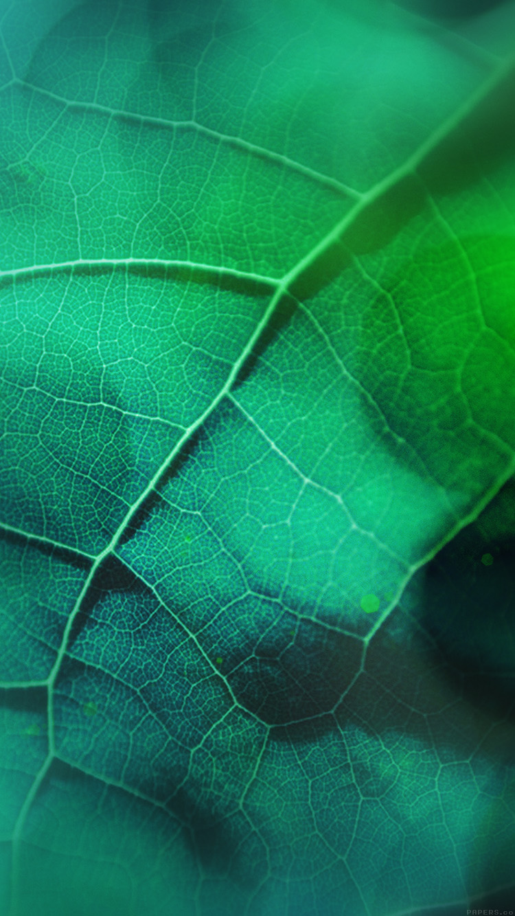 iPhone6papers.co-Apple-iPhone-6-iphone6-plus-wallpaper-vg59-leaf-flare-nature-green-wood-love-pattern