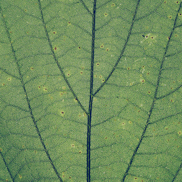 iPapers.co-Apple-iPhone-iPad-Macbook-iMac-wallpaper-vh97-green-leaf-texture-nature-pattern-wallpaper