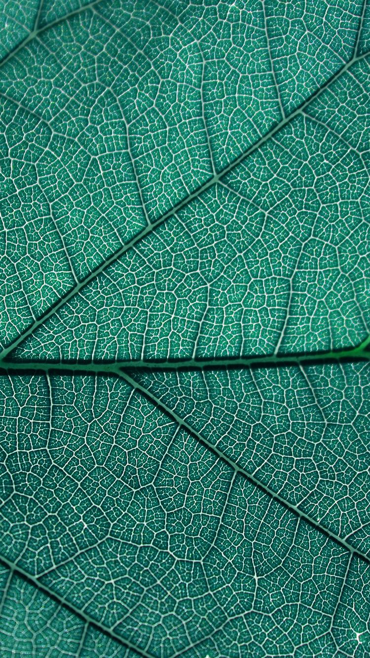 iPhonepapers.com-Apple-iPhone-wallpaper-vi53-leaf-blue-nature-texture-pattern