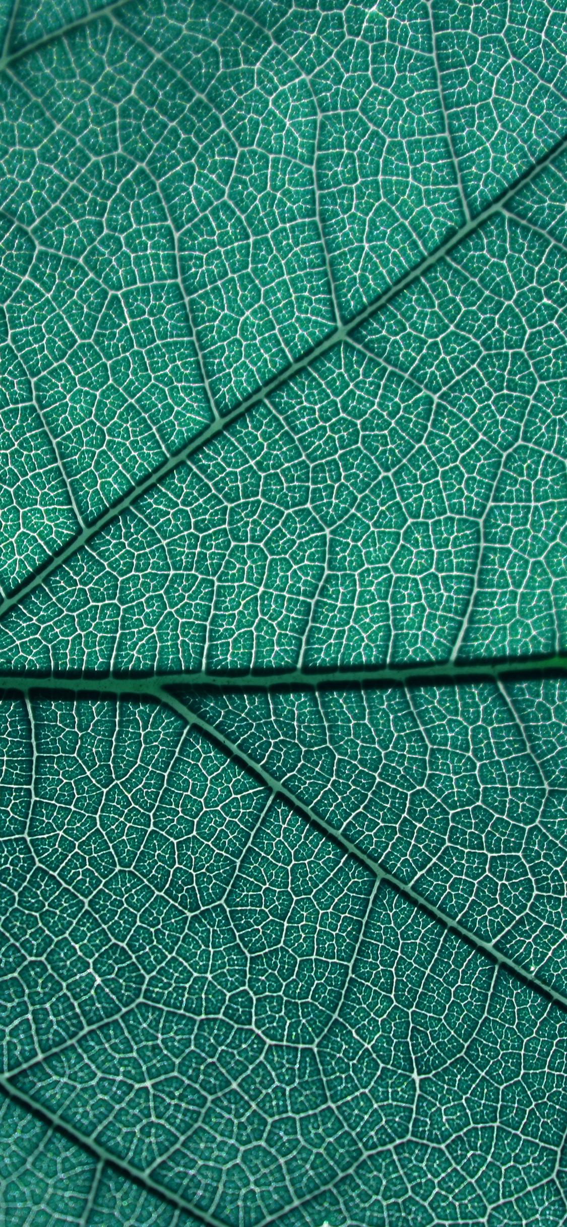 iPhonexpapers.com-Apple-iPhone-wallpaper-vi53-leaf-blue-nature-texture-pattern