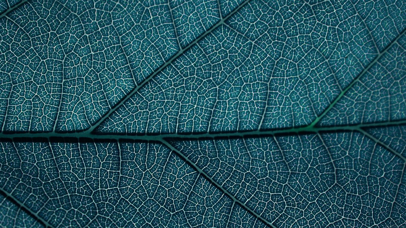 desktop-wallpaper-laptop-mac-macbook-airvi54-leaf-blue-dark-nature-texture-pattern-wallpaper