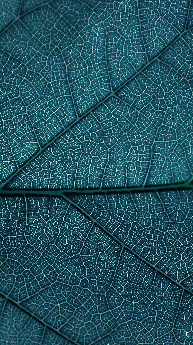 iPhone6papers.co-Apple-iPhone-6-iphone6-plus-wallpaper-vi54-leaf-blue-dark-nature-texture-pattern