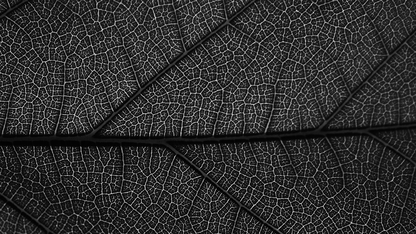 desktop-wallpaper-laptop-mac-macbook-airvi55-leaf-dark-bw-nature-texture-pattern-wallpaper