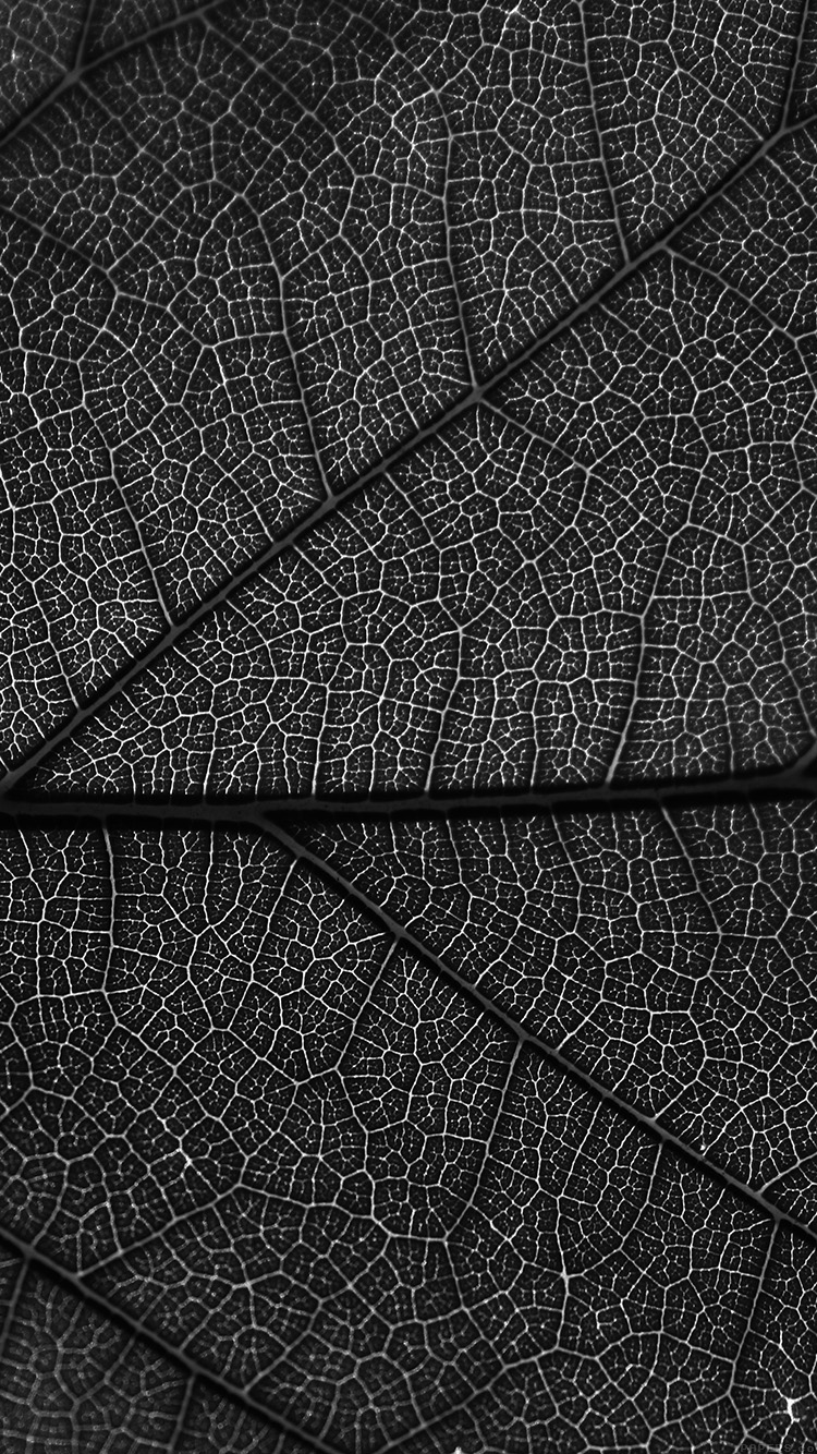 iPhone6papers.co-Apple-iPhone-6-iphone6-plus-wallpaper-vi55-leaf-dark-bw-nature-texture-pattern