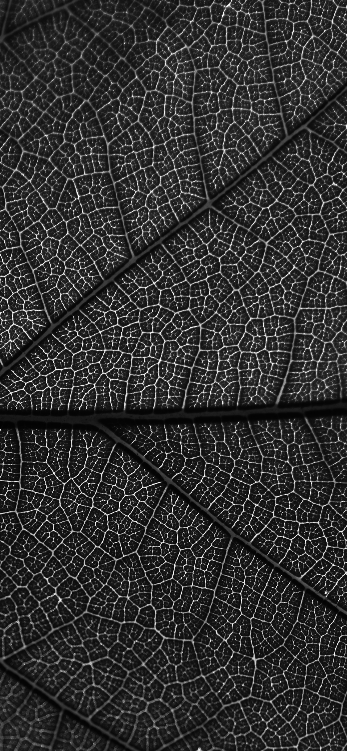 iPhoneXpapers.com-Apple-iPhone-wallpaper-vi55-leaf-dark-bw-nature-texture-pattern