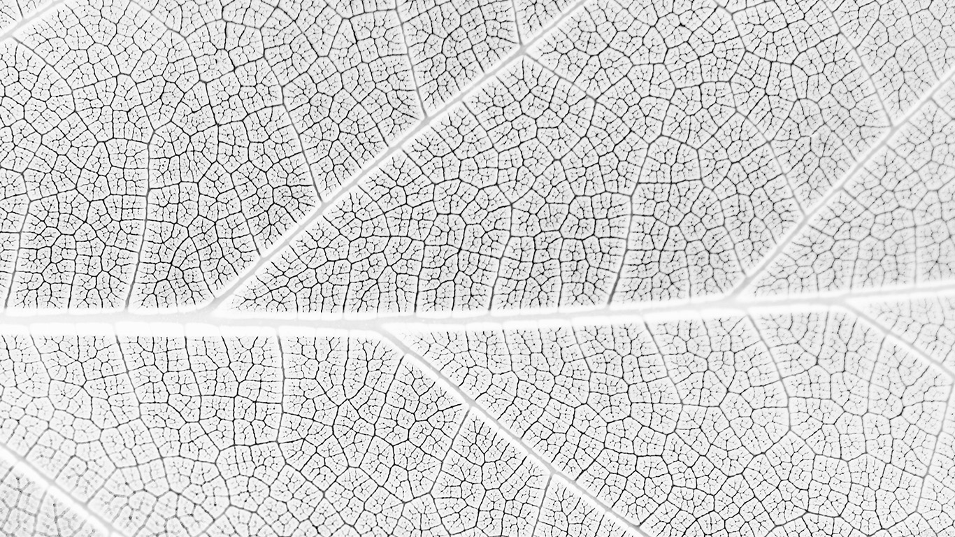 desktop-wallpaper-laptop-mac-macbook-airvi56-leaf-white-bw-nature-texture-pattern-wallpaper
