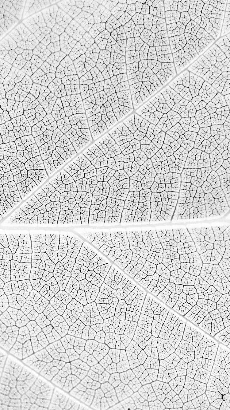 iPhone6papers.co-Apple-iPhone-6-iphone6-plus-wallpaper-vi56-leaf-white-bw-nature-texture-pattern