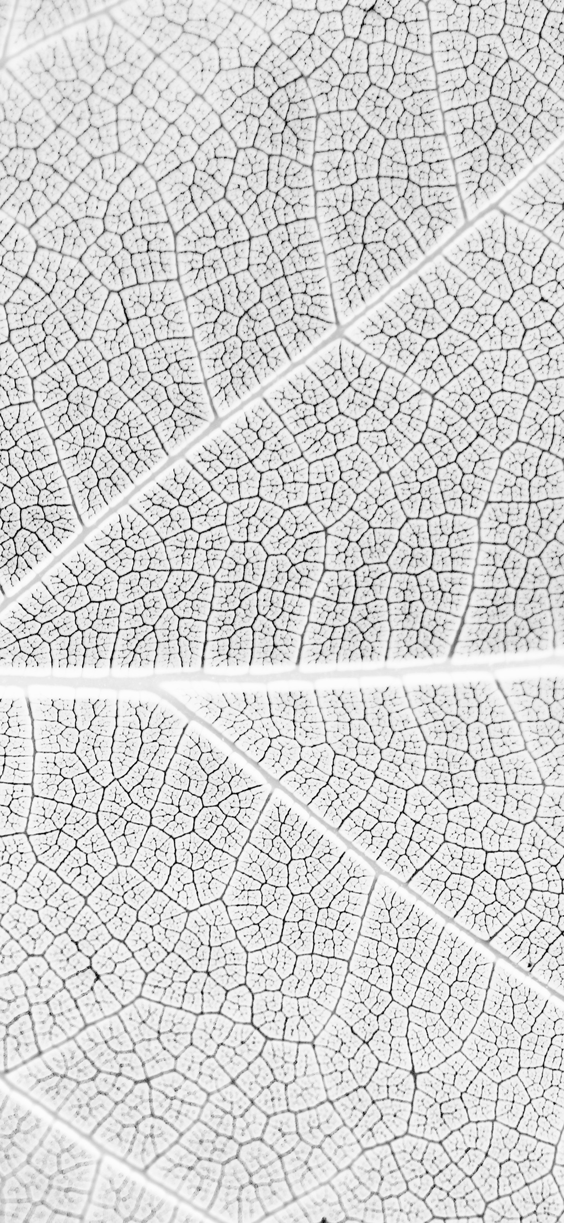 iPhoneXpapers.com-Apple-iPhone-wallpaper-vi56-leaf-white-bw-nature-texture-pattern