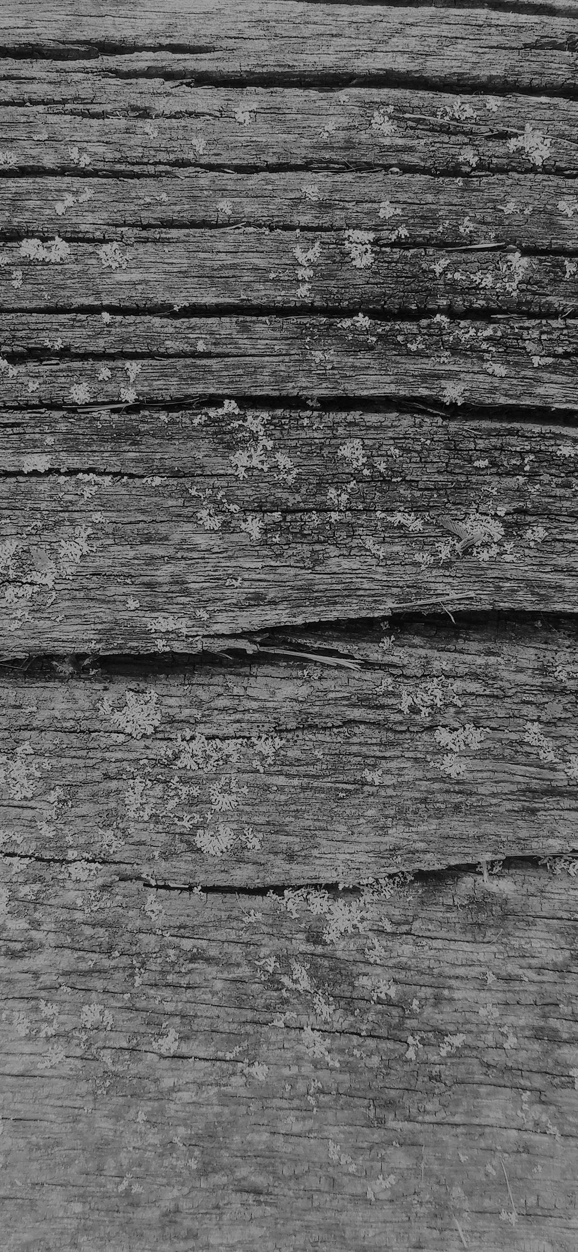 Iphonexpapers Com Iphone X Wallpaper Vj33 Wood Art Nature