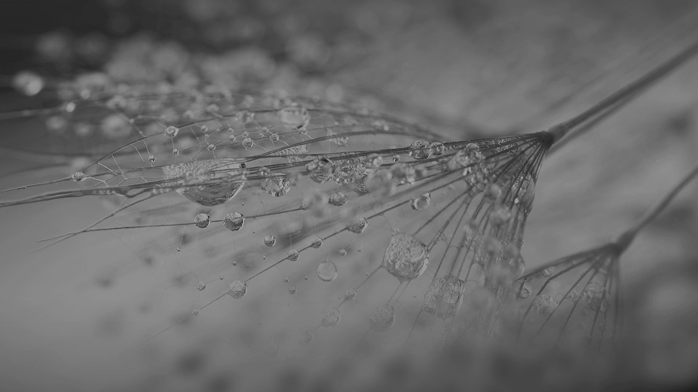 desktop-wallpaper-laptop-mac-macbook-air-vj74-nature-rain-drop-flower-dark-bw-pattern-wallpaper